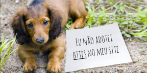 Dog shaming - Site sem HTTPS